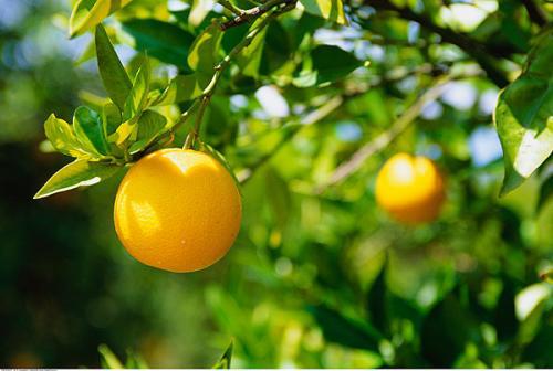 贵阳别墅花园篇——适合种在贵阳别墅庭院里的十一种植物